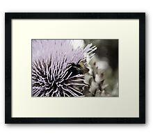 Foraging for nectar Framed Print