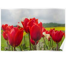 Tip to thru the Tulips Poster