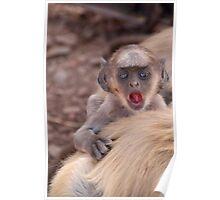 Baby Langur Monkey Ranthambore Fort Poster