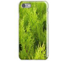 Fir Tree iPhone case iPhone Case/Skin