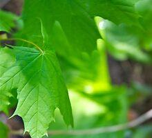 Green Leafs by Randall Robinson