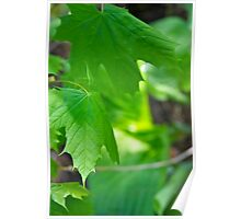 Green Leafs Poster