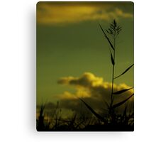 Reach for life above  the thorns amongst the clouds of light. Canvas Print