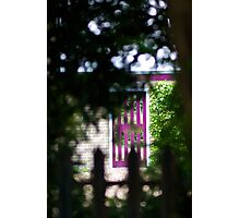 Purple Garden Door Photographic Print
