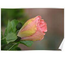 Hibiscus Bud Poster