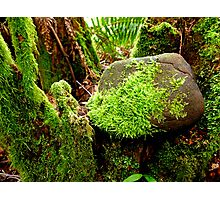 Lush Spring Moss Photographic Print
