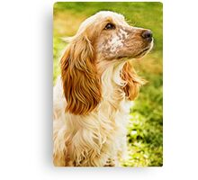 Kingsley Is A Kingly K9 Canvas Print