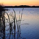 Down by the Lake by Natasha M