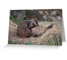 Brush-tailed Rock Wallaby Greeting Card