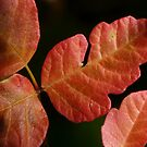 leaves of three by tego53