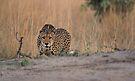 Got my eye on you! by Explorations Africa Dan MacKenzie