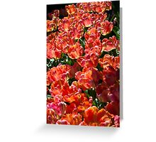 Tulip Conference Greeting Card