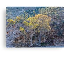 Gums in the Creek. Canvas Print
