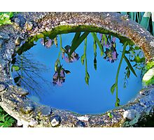 Water on the Iris on the water Photographic Print