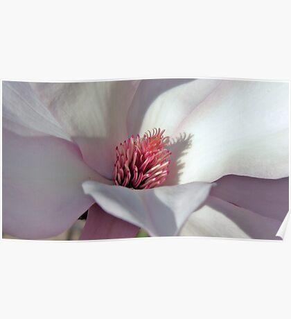 Magnolia  inner Santum Poster