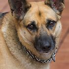 cute wolfhound dog by spetenfia