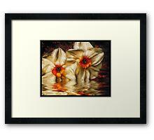 Daffodip Framed Print