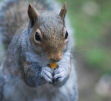 Western gray squirrel by Tori Snow