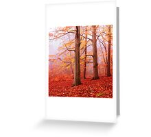 Burnham Beeches. November Greeting Card