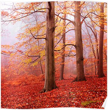 Burnham Beeches. November by Irina Chuckowree