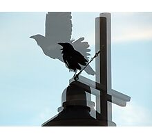 Collage of Black Crows on Light Pole Photographic Print