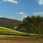 Yellow Field and Trees by photoshot44