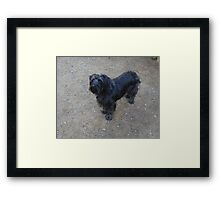 Silver: My ball please...... Framed Print