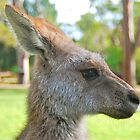 What's that Skippy? by peasticks