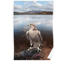 falcon perched on gloved hand with lake scene Poster