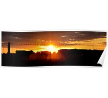 Cattle in the Sunset Poster
