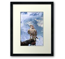falcon perched on leather gloved hand Framed Print