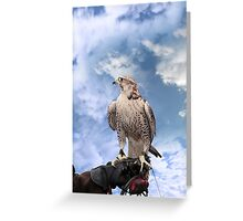 falcon perched on leather gloved hand Greeting Card