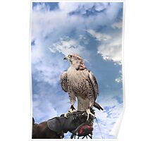 falcon perched on leather gloved hand Poster