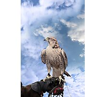 falcon perched on leather gloved hand Photographic Print