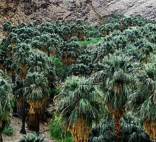 A Desert Oasis  by Tori Snow