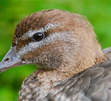 This Little Brown Duck by peasticks