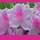 Prettily Pink by budrfli