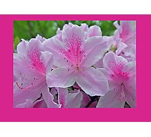 Prettily Pink Photographic Print