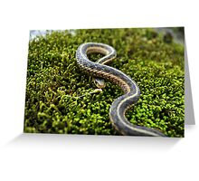 Sunny Scales Greeting Card