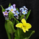 True-Forget-me-not Wildflowers with Round-leaved Yellow Violet by MJD Photography  Portraits and Abandoned Ruins