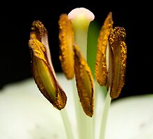 Spotted Lily #2 by Paul Dean
