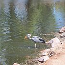 Blue Heron & Goldfish  by Gordon Pegler
