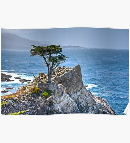 Lonely Cypress Poster