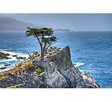 Lonely Cypress Photographic Print
