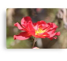 Ruby Red Canvas Print