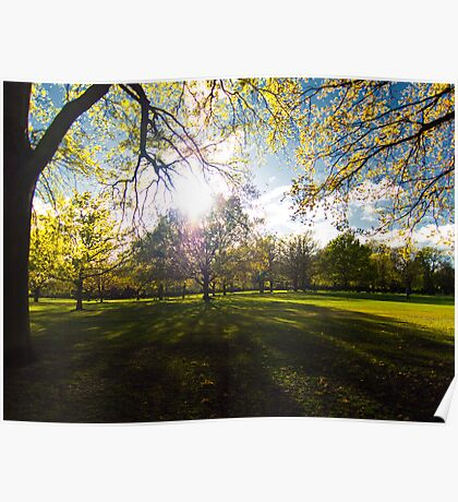 Sun filled trees Poster