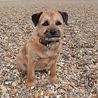 Border Terrier by eggnog
