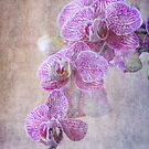 Purple Orchid by Rozalia Toth