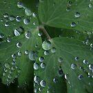 Nature's Diamonds ~ by Renee Blake