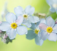 Forget-Me-Not by Sharon Johnstone